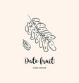 date fruit drawing dried dates sketch dates vector image vector image