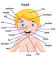 parts of body vector image vector image