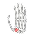 Human anatomy hand palm icon cartoon style vector image