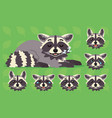 cute raccoon sleeping of vector image vector image