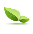 green ecology concept icon leaf green leaf plant vector image