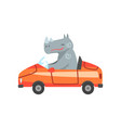 hippo driving red car animal character using vector image vector image