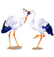 pair of storks isolated on white background vector image