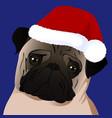 pug close up in santa cap vector image