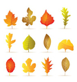 different kinds of tree autumn leaf icons vector image vector image