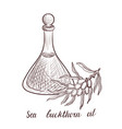 drawing sea buckthorn oil vector image