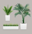 plants potted