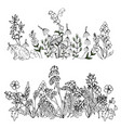 wild flowers and leaves vector image vector image