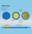 zika virus structure vector image