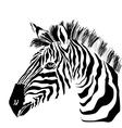 Portrait of zebra on the white background vector image