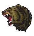angry bear roaring logo mascot vector image vector image