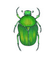 bug bronze hand drawn insect vector image vector image