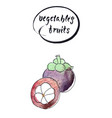 half and one whole mangosteen vector image vector image