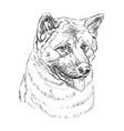 american akita hand drawing portrait vector image vector image