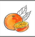 drawing orange vector image