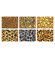 collection leopard textures seamless prints vector image