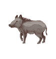 hand drawn wild boar vector image vector image