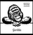 peeking gorilla - isolated on vector image vector image