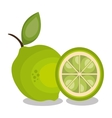 icon lemon slice design vector image