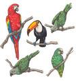 tropical birds sketch vector image