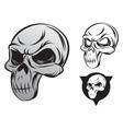 single skull vector image