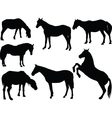 horses collection - vector image