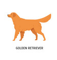 golden retriever gorgeous hunting dog or gundog vector image vector image