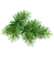 Green Christmas pine tree branch vector image vector image
