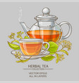linden tea vector image vector image