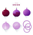 set of fresh red onions vector image vector image