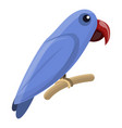 solomon parrot icon cartoon style vector image