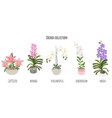 beautiful flat style orchid flower collection on vector image