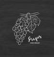 grapes fruit drawing sketch grapes with chalk vector image