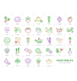 Vegetables line icons set isolated Spices logo vector image