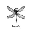 dragonfly hand drawn sketch vector image vector image