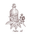 drawing castor oil vector image vector image