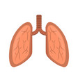 isolated human lungs vector image
