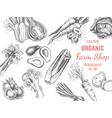 organic farm shop sketch vegetables vector image