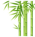 realistic 3d detailed bamboo shoots vector image