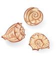 sea seashells vector image vector image