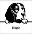 beagle - peeking dogs - - breed face head isolated vector image