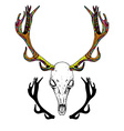 Color Sketch Deer Skull vector image vector image
