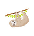 cute sloth hanging on tree branch funny greeting vector image
