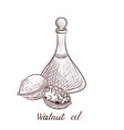 drawing walnut oil vector image vector image