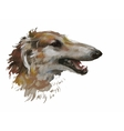 Greyhound animal dog watercolor vector image vector image