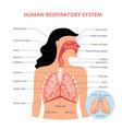 respiratory system human anatomy airways vector image vector image