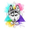 sketch of husky vector image