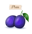 bright blue ripe plums vector image
