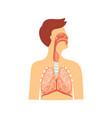 anatomical medical scheme respiratory system vector image