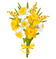 daffodils and mimoses vector image vector image